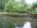 Morava-DSC_2871