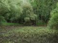 Morava-DSC_2873